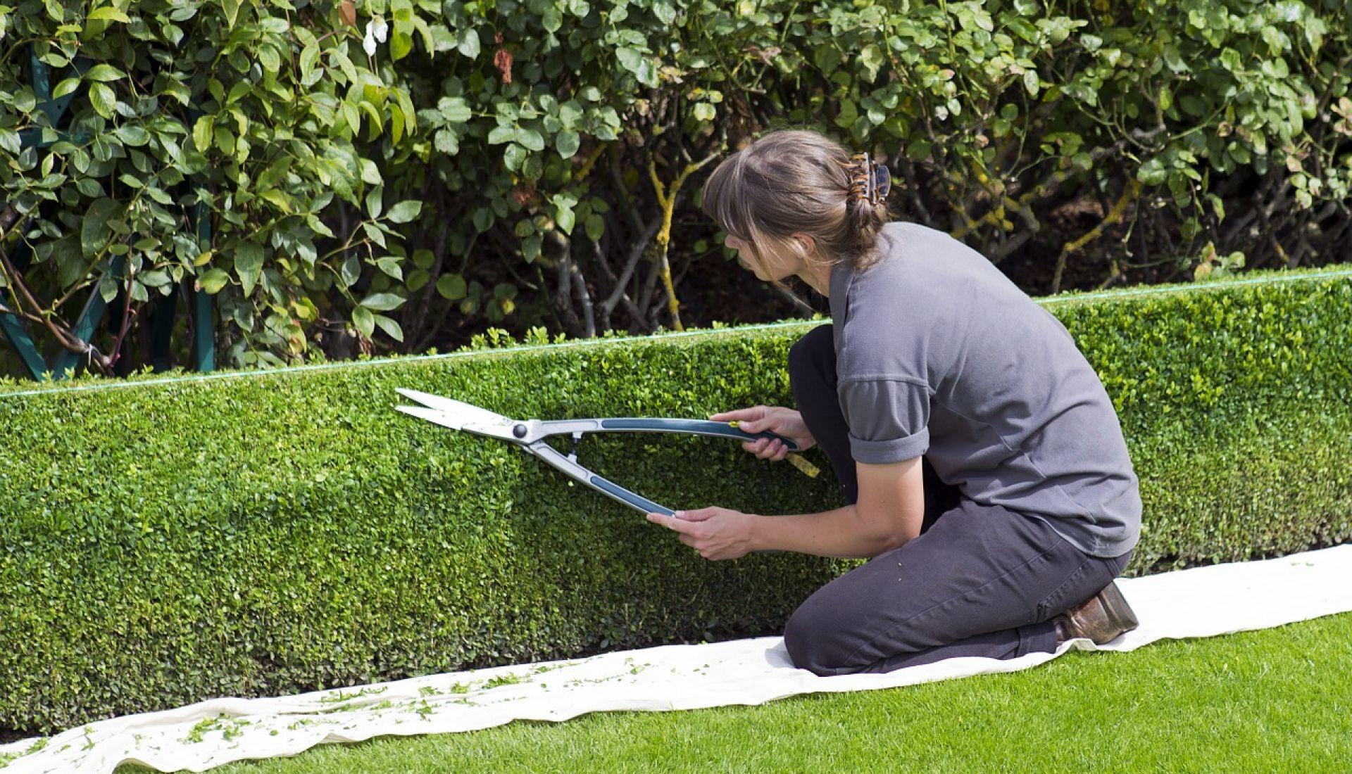 La taille des arbustes : les grands principes