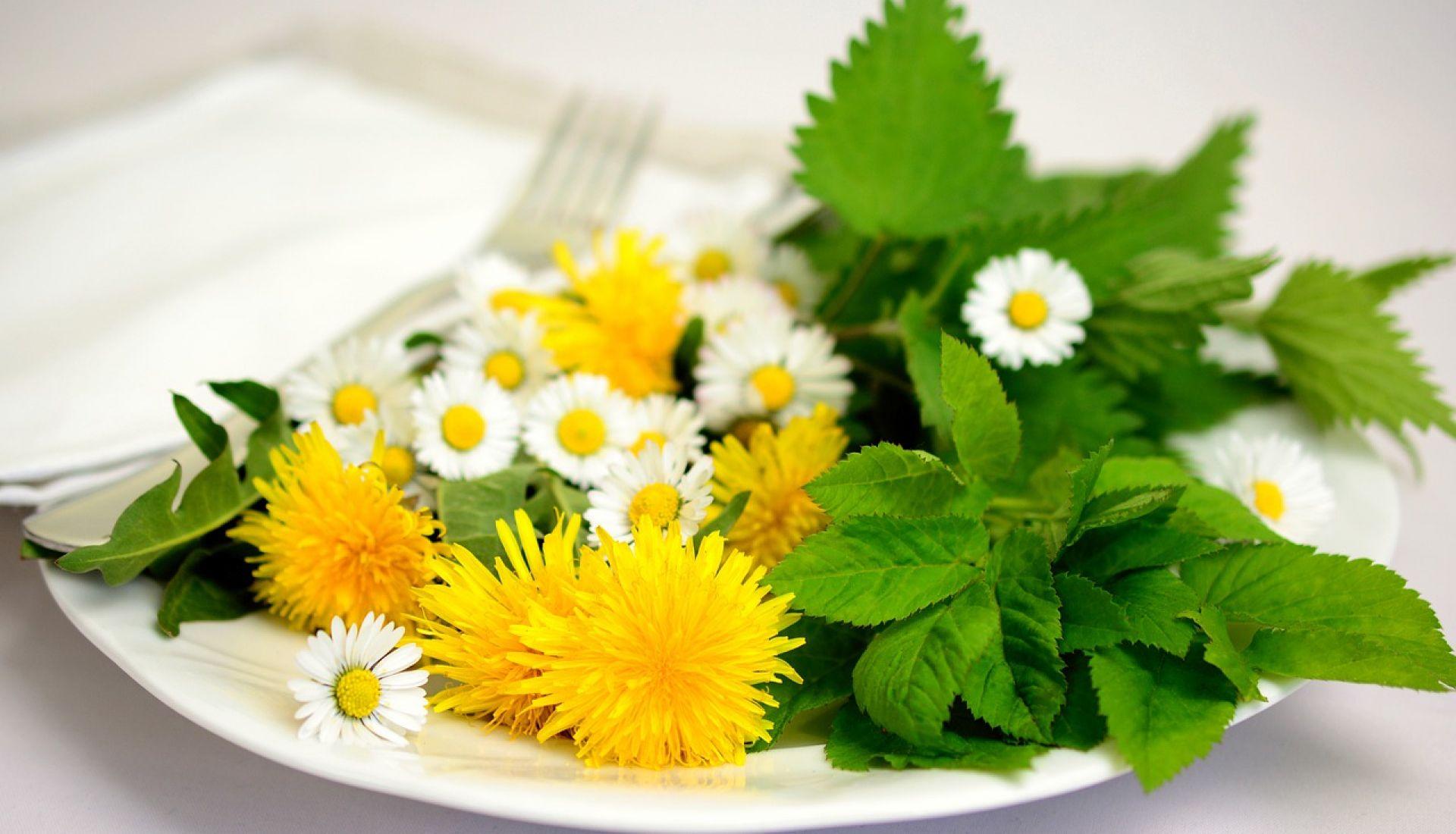 A la cueillette des salades sauvages