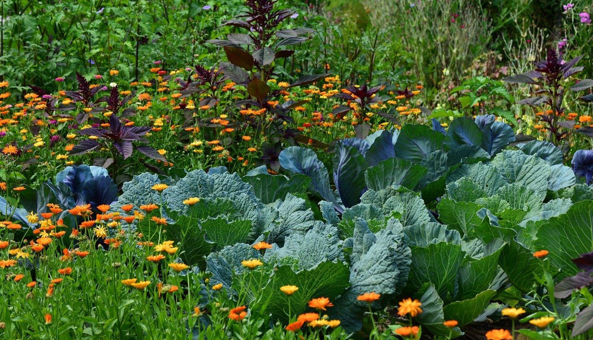 Questions / réponses aux jardins