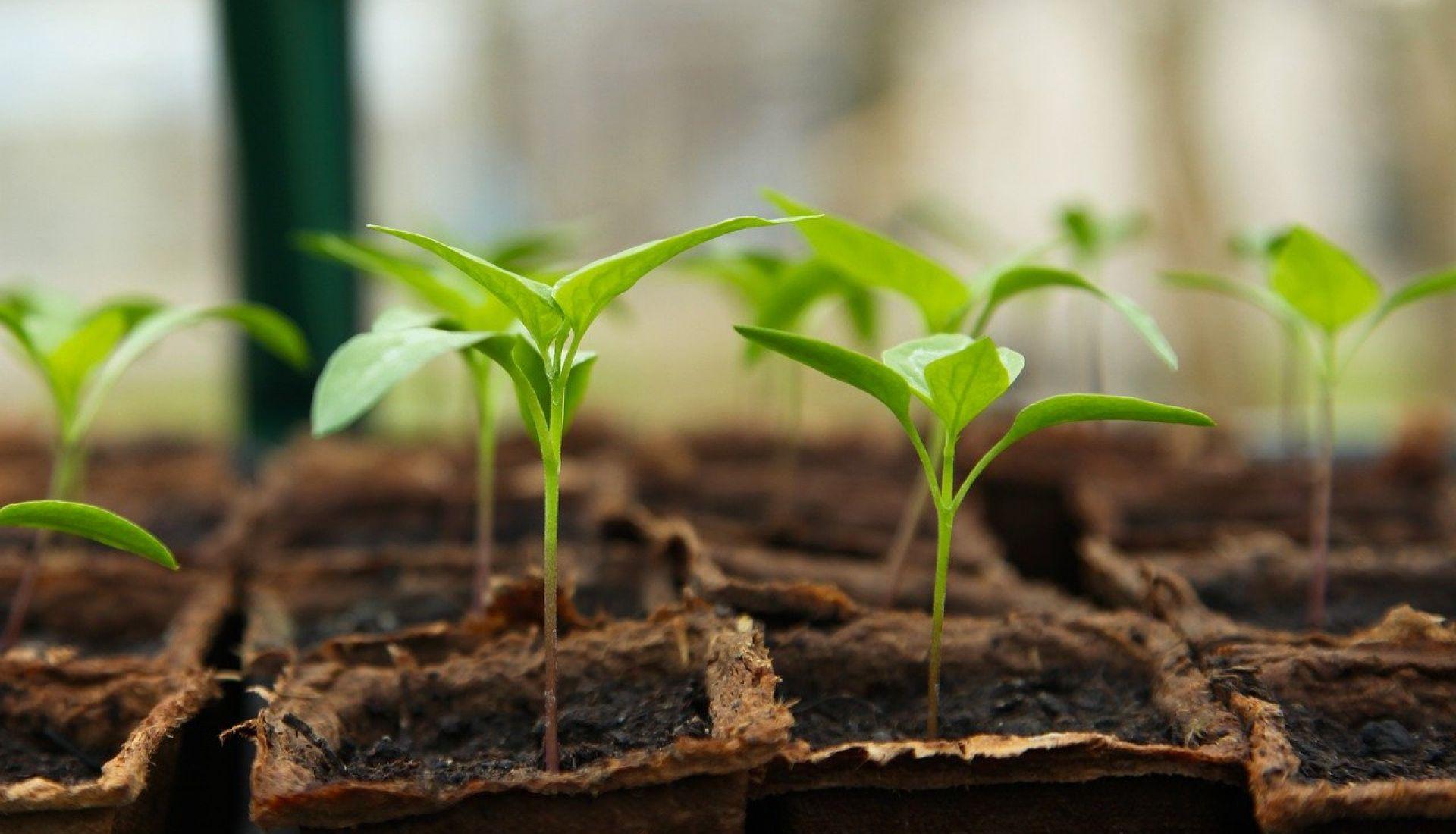Techniques de reproduction des plantes